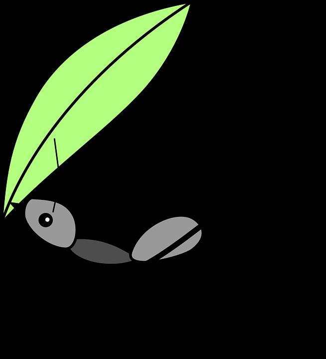 gegen-ameisen-tipps