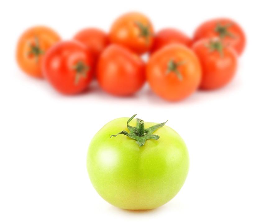 gruene-unreife-tomate