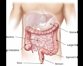 nervoeser-magen-aufbau