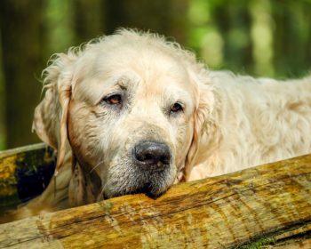 hunde-schnupfen