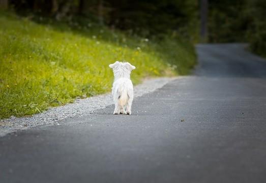 Hund entlaufen,einsam auf einer Straße